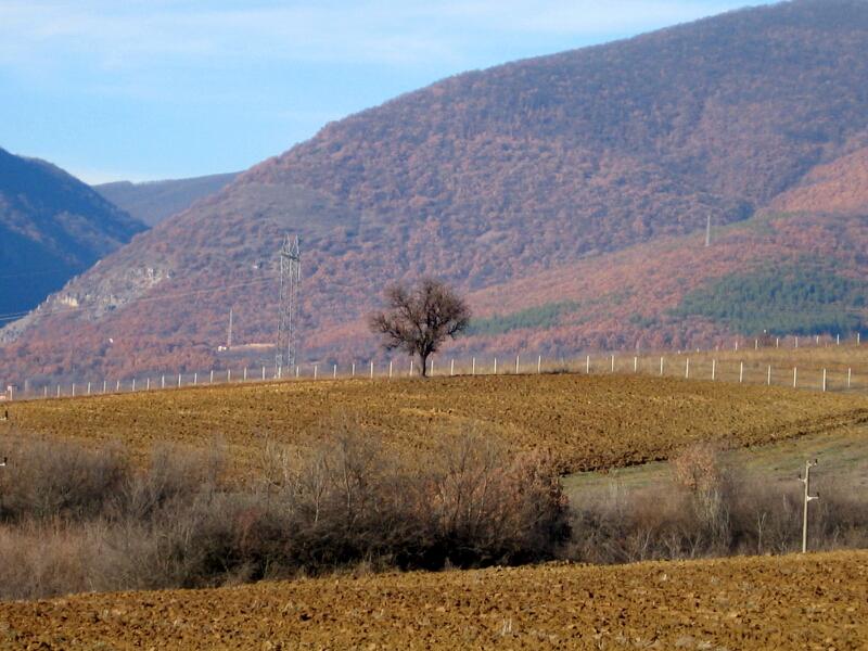 Поглед към мястото на унищожената могила, северно от Киселичка махала (в средата при дървото)
