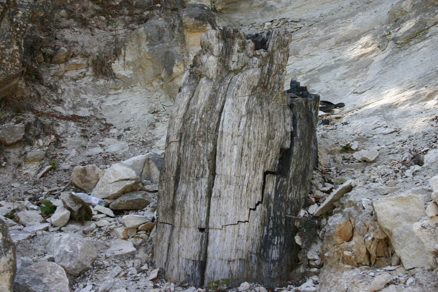"""Дърво от """"Вкаменената гора"""""""